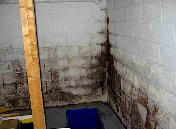 Basement & Wall Mold Removal Cleveland Ohio
